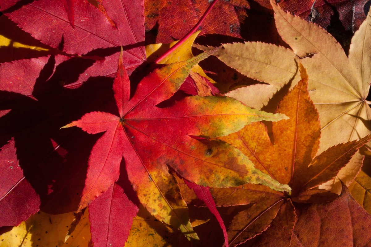 Autumn Hygge: Look for the Gold at the edges of Life