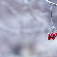 A Self Care Christmas Day 7: Music is the Memory of the Soul