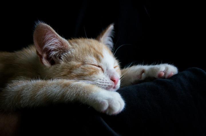 cat-1056661_1920