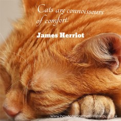 Cats are connoisseurs of comfort