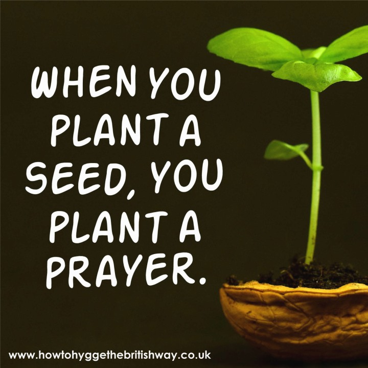 When you plant a seed you plant a prayer