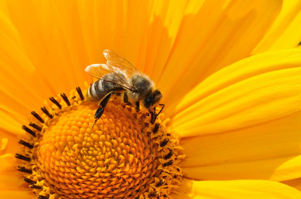 The Resilience of The Worker Bee