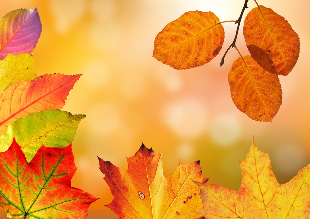 Oh, Autumn: Autumn and Fall hygge