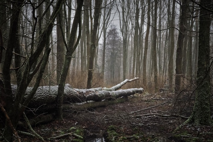 forest-3143157_1920.jpg