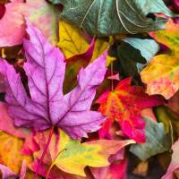 Golden Days of Autumn Hygge: Small actions to improve your life during Fall.